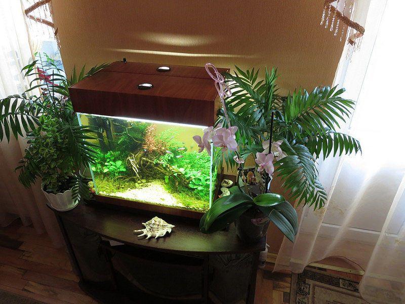 Если в помещениях сильно сухой воздух, то аквариум и комнатные растения помогут повысить уровень влажности