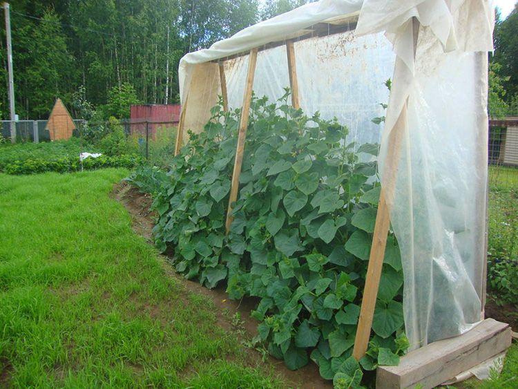 Правильно выбранное место – залог хорошего урожая огурцов