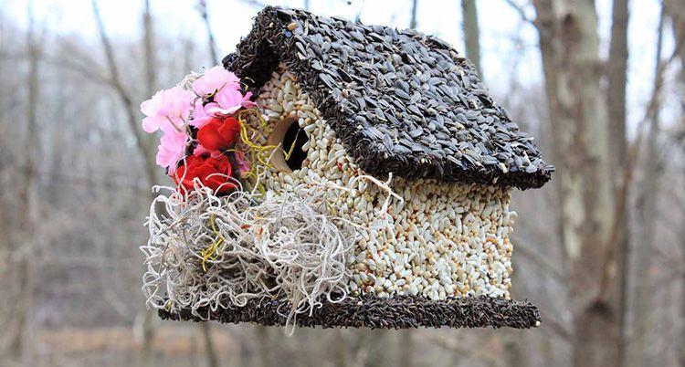 С заботой о пернатых: необычные идеи, как сделать кормушку для птиц своими руками