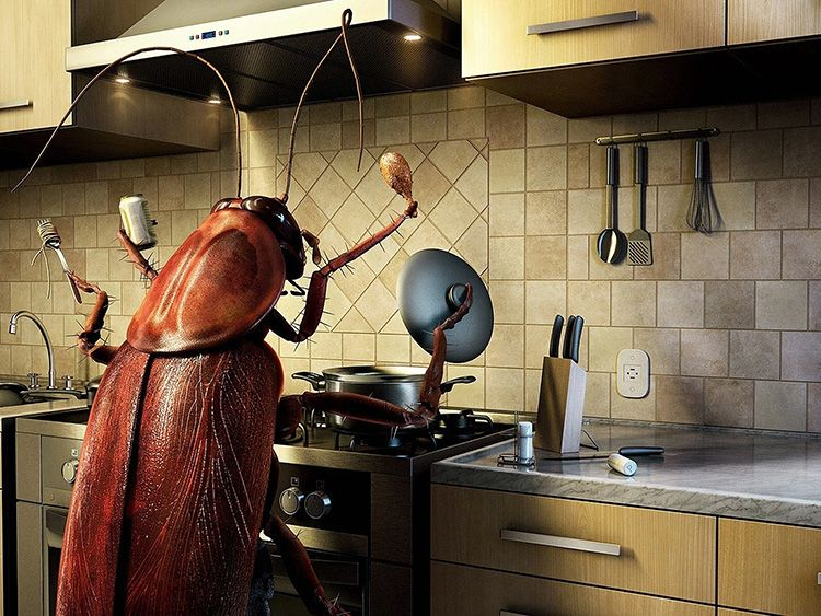 Таракашкам не место в доме