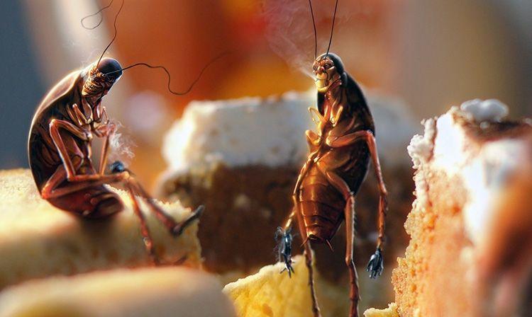 Шарики из буры понравятся тараканам