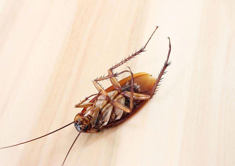 Мышьяк окажет необходимое действие