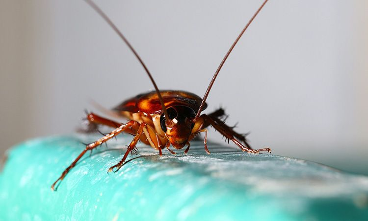 Холод губителен для таракашек