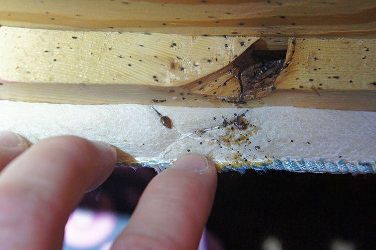 Через трещины насекомые легко проникнут в дом