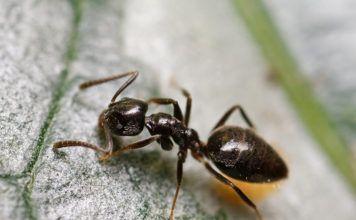 Насекомые долой! Лучшие и проверенные способы как избавиться от муравьев в доме