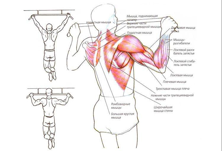 Какие мышцы тренирует прямой хват