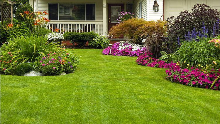 Ухоженный газон может стать прекрасной основой для цветника