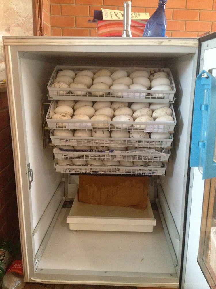 Старый холодильник превосходно справится с поставленной задачей