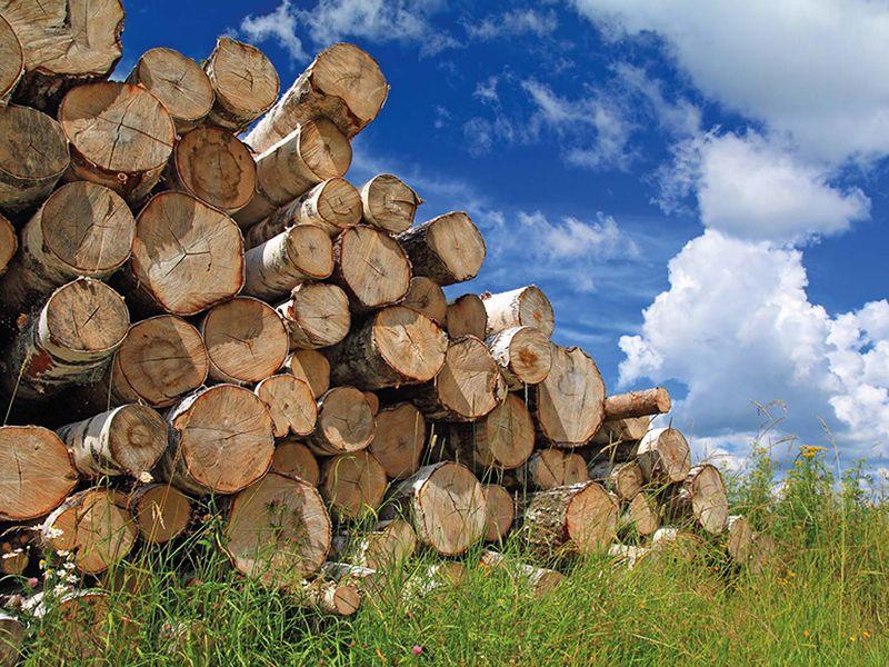 Как хранить дрова на даче