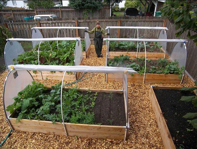 Если планируется выращивание сразу несколько в одном парнике, то желательно их разделить: с помощью лишнего «пустого» ряда или клеёнки.