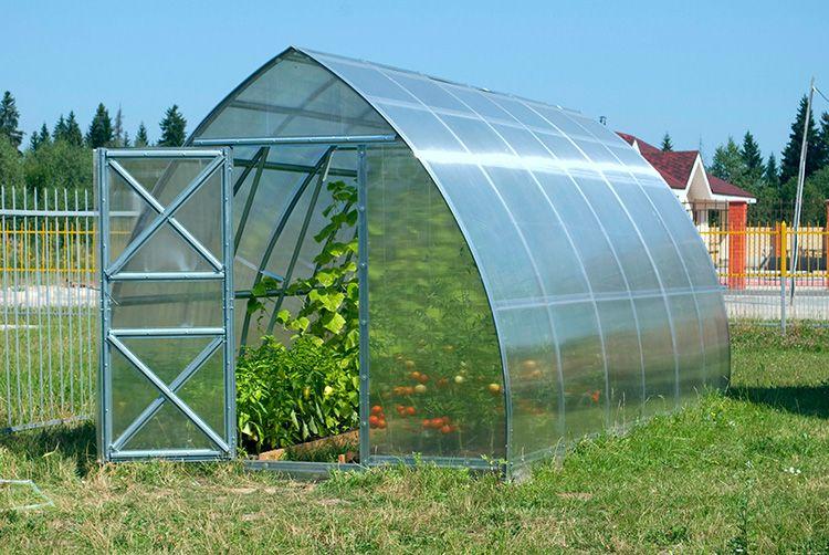 Теплица с качественным поликарбонатом – гарантия богатого урожая