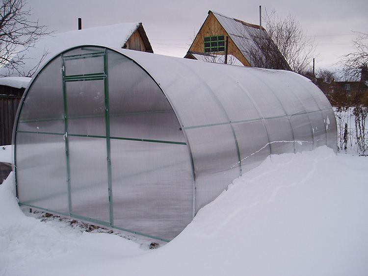 Сильные морозу укрытию не страшны