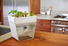 Рыбоводство для лентяев: по какому принципу работает самоочищающийся аквариум