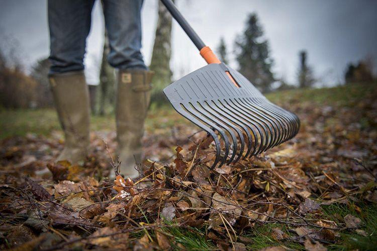 Для сбора листьев они используют обычные грабли, а после перекидывают листву тяжёлой совковой лопатой