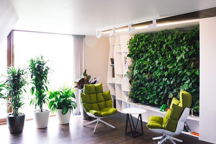 Такие зелёные стены не только экологичны, но и экономичны, растения могут использоваться для оформления салатов и закусок, либо просто скрывать тот элемент стены, который давно требует ремонта.