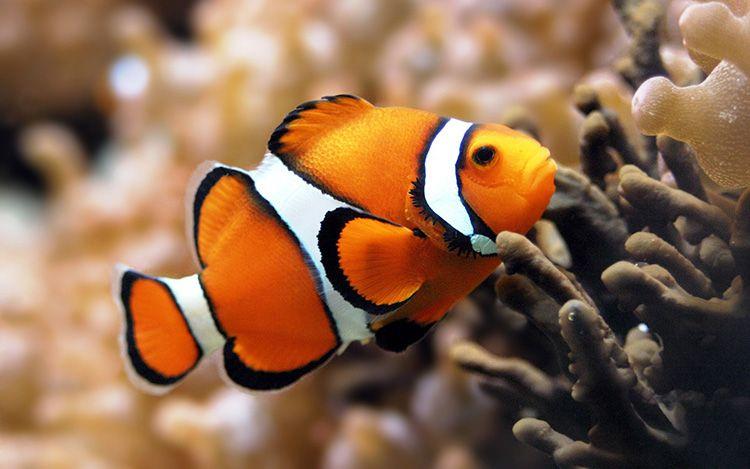 Помните: голодная рыба – здоровая рыба