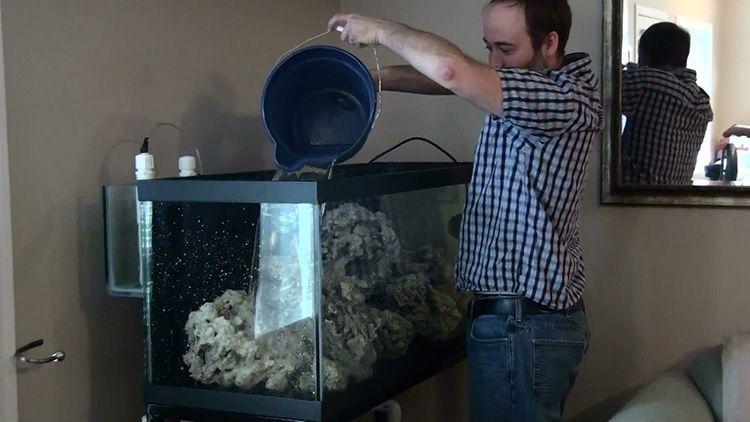 Главная ошибка всех начинающих – постоянная смена воды. И чем чаще они это делают, тем активнее размножаются вредоносные бактерии