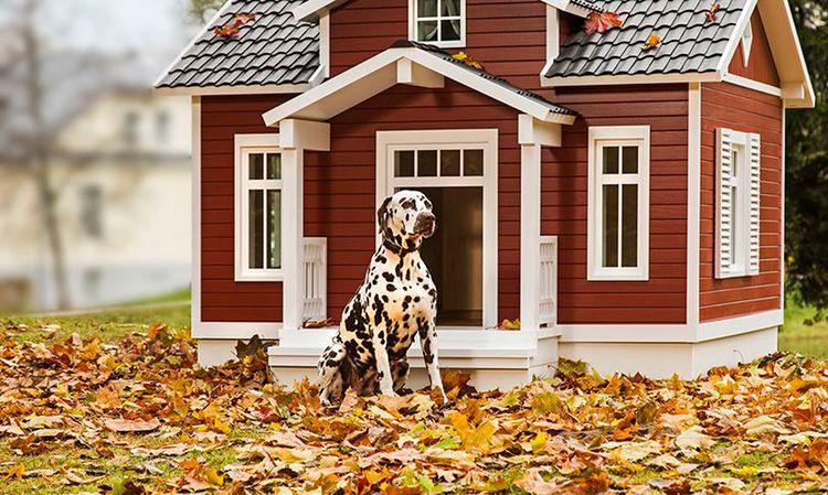 Кто сказал, что конура для пса не может быть красивой?