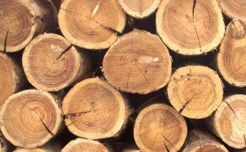 Выбор древесины для строительства дома: всё по науке и для лучшего результата