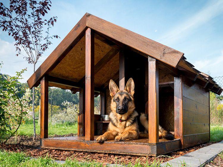 Размеры конуры должны соответствовать породе собаки