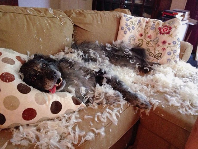 Если такого места не будет, учтите, что собака будет чувствовать себя хозяйкой всей квартиры