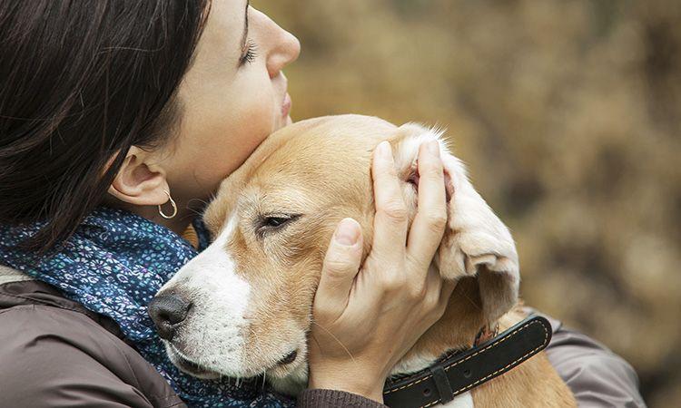 Здоровый, ухоженный пёс отблагодарит вас безграничной преданностью!