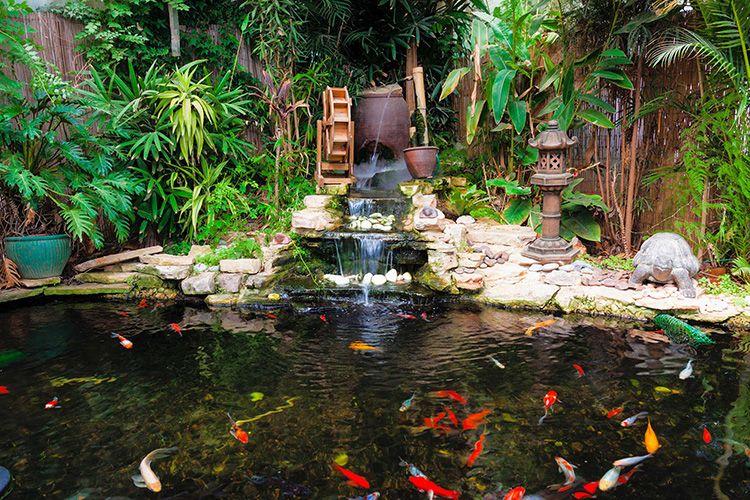 В самом водоёме будут себя превосходно чувствовать себя кувшинки и лилии, а также декоративные карпы