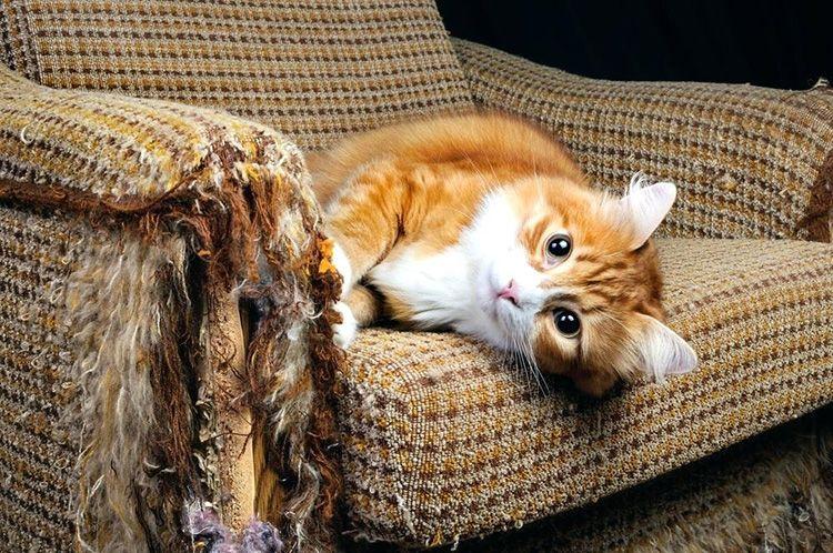 Неконтролируемый процесс заточки когтей может зайти так далеко, что вам придётся задуматься о новой мебели