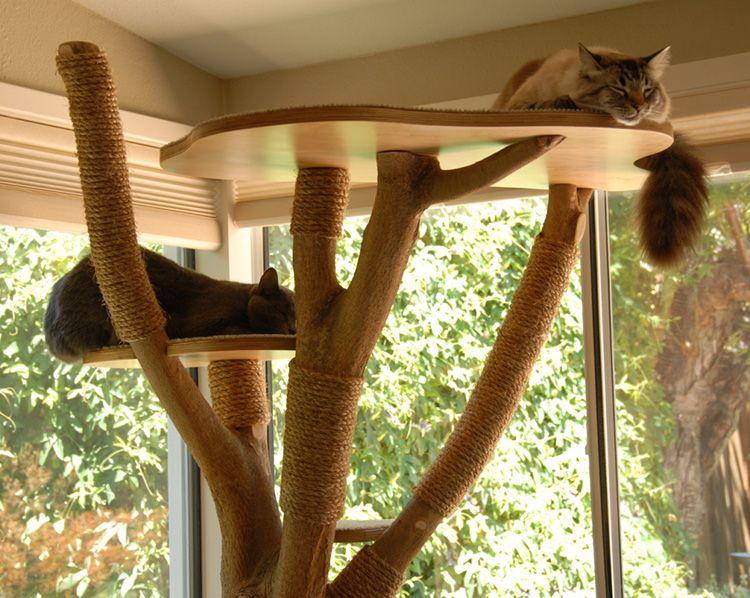 Слишком пахучее дерево – плохое место для метки, и ваш питомец будет его игнорировать