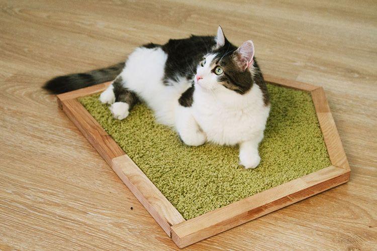 Когтеточка для кошек своими руками: спасаем мебель от пушистого проказника