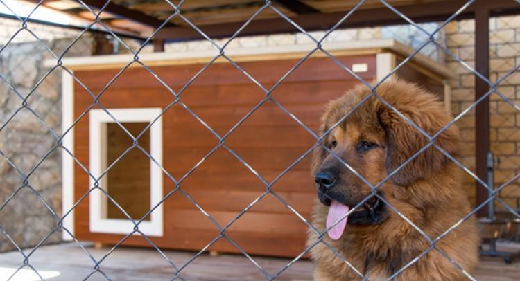 Уютный вольер поможет организовать вашей собаке спокойный сон и отдых