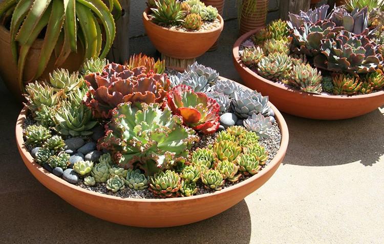 Все растения должны быть примерно одного масштаба