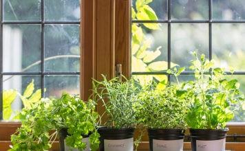 Грядка на подоконнике: 5 способов достижения рекордного урожая