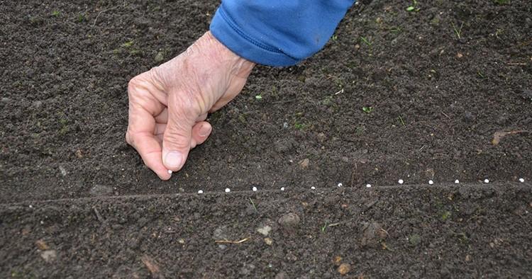 Таким образом можно посадить морковь, лук, чеснок, редиску, салатную зелень, свёклу