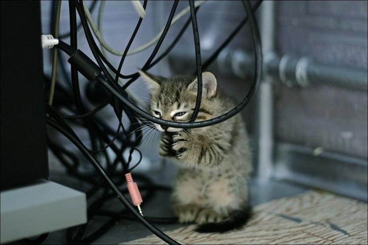 Домашние животные – главные инспекторы по проводке