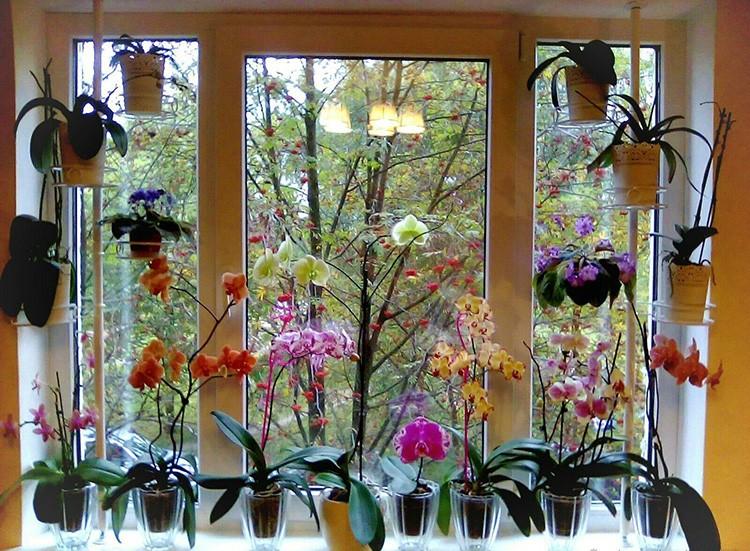 Цветы на окне можно не только установить на подоконнике: их можно повесить или выстроить на этажерке