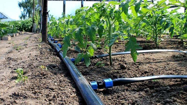 Системы капельного полива имеют высокий спрос среди дачников и фермеров