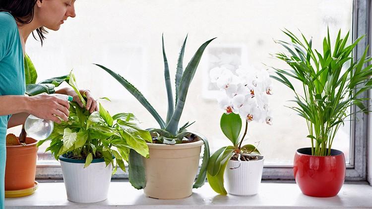 Комнатные цветы не выживут в суровых условиях