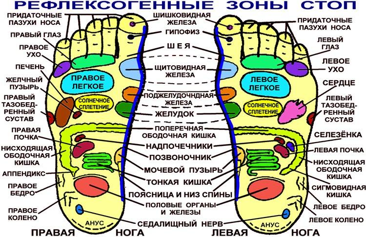 Зоны на ступнях отвечают за определённые органы