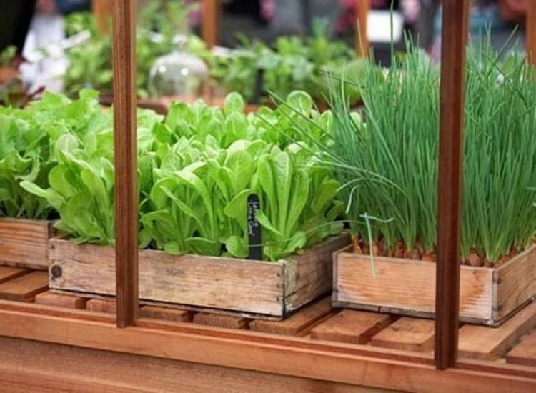 Если почва перенасыщена органикой, растение начинает «жировать», то есть наращивать зелёную массу, не задумываясь о формировании плодов