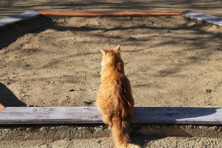 И второй момент: предусмотрите на песочнице крышку, чтобы соседские кошки по ночам не оставляли в ней «сюрпризы»