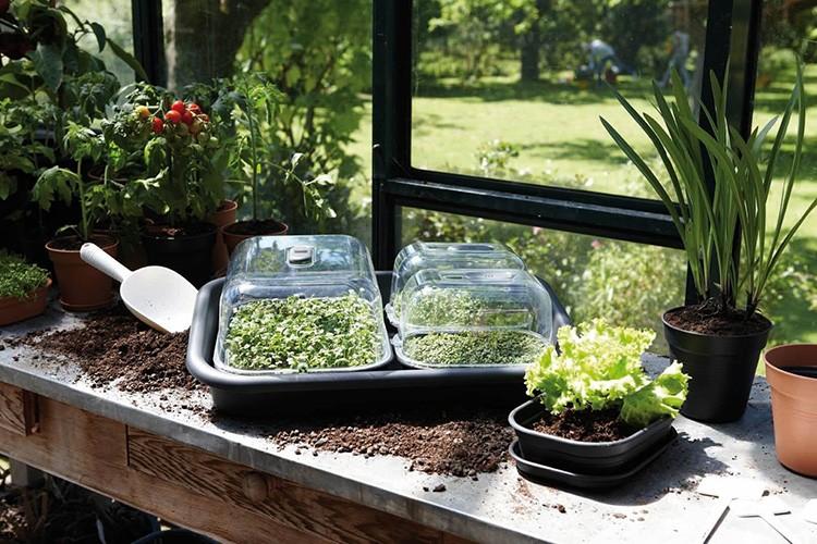 Нужен баланс: правильное соотношение компоста, золы и суперфосфатов. Земля или торф с перегноем должны быть смешаны в равных пропорциях