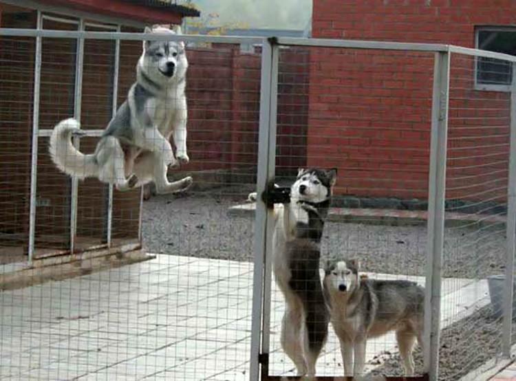 Лучше установить строение таким образом, чтобы пёс видел вход в дом.
