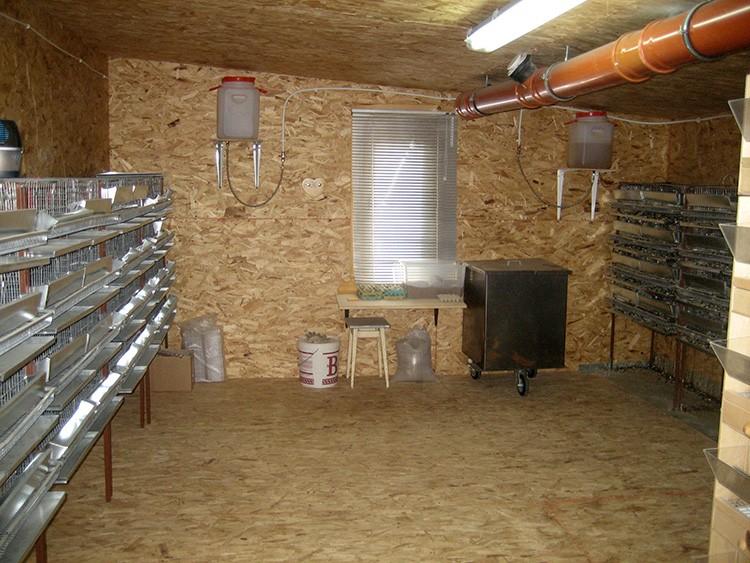 Перепелиная мини-ферма в гараже
