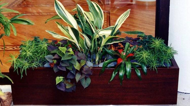 Посадите растения, которые требуют одинаковых условий полива и освещения