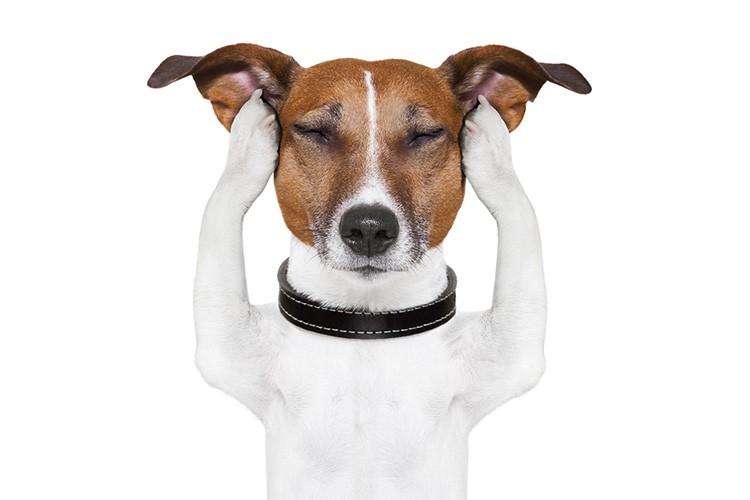 Если в доме есть домашние животные, ультразвуковой агрегат может им навредить.