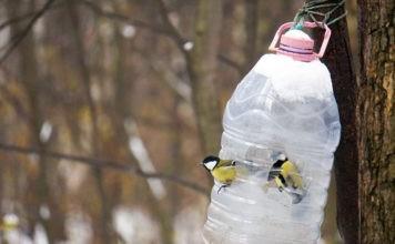 Простая и добротная кормушка для птиц из пластиковой бутылки: не загрязняем природу и заботимся о пернатых