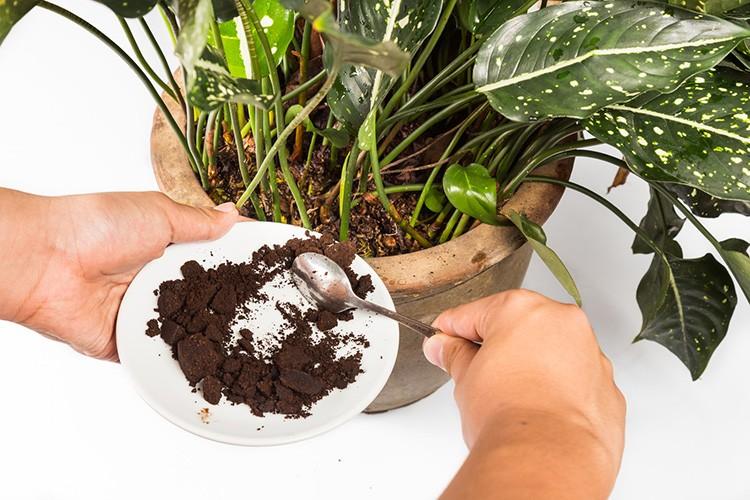 Кофейная гуща – проверенное удобрение
