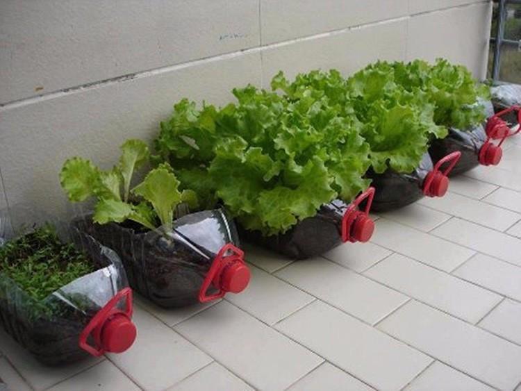 Пластиковые бутыли от воды могут стать контейнерами для выращивания овощей и специй