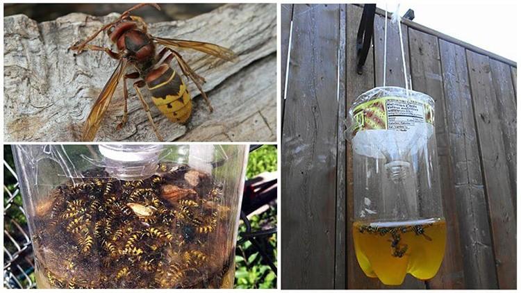 Укусы ос очень болезненны, и соседство этих насекомых нежелательно